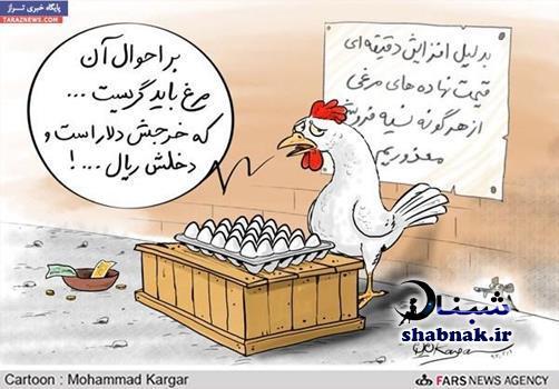 علت گران شدن تخم مرغ و دلیل گرانی تخم مرغ