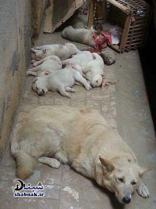 کشتن توله سگ ها در بوشهر با چوب میخدار +تصاویر