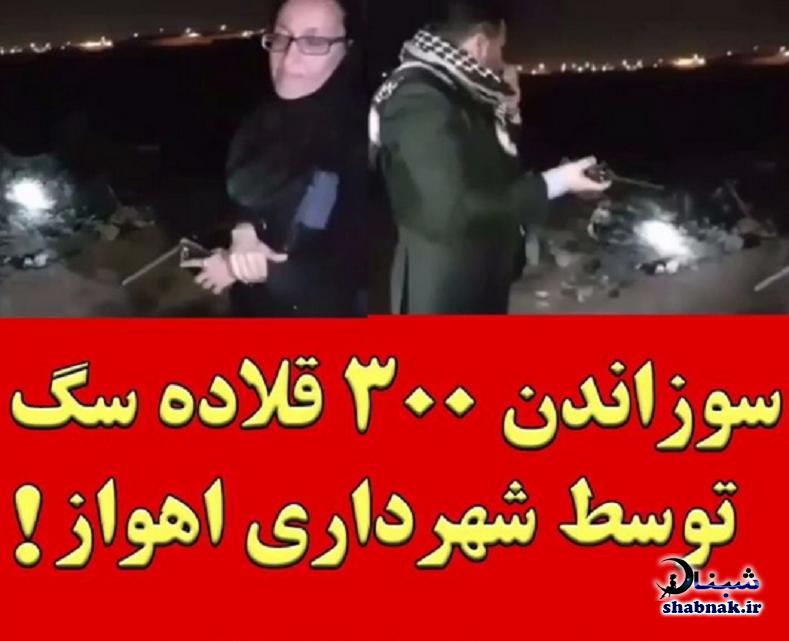 عکس و فیلم سوزاندن 300 سگ در اهواز توسط شهرداری