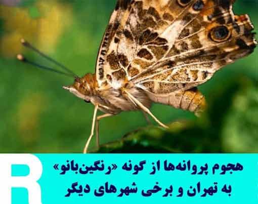 علت هجوم پروانهها به تهران چه بود , حمله پروانه ها به تهران