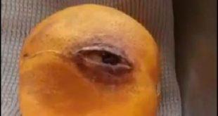 گریه پرتقال